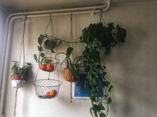 Kithcenplants